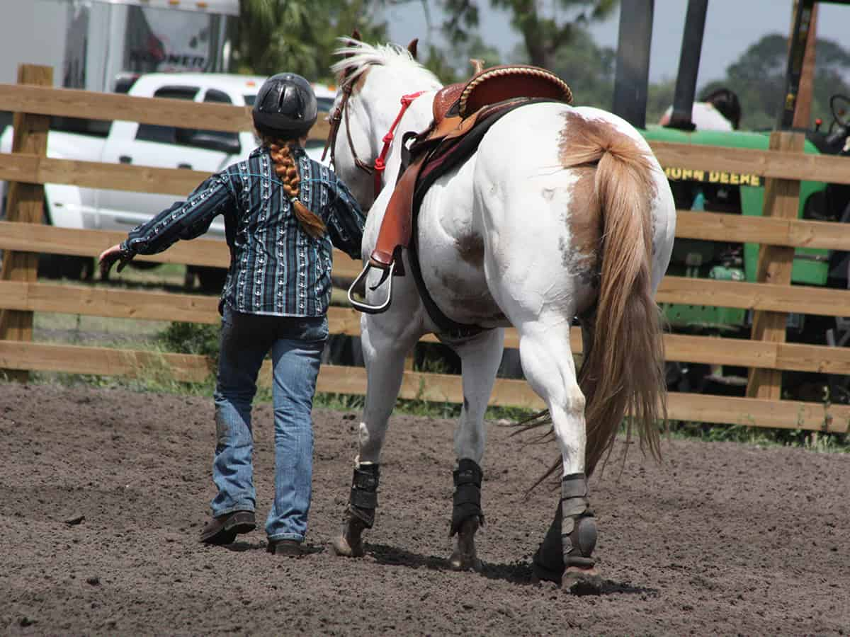 Girl walking a white horse in a corral