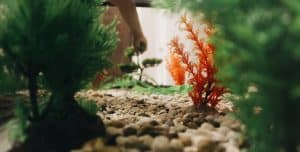 close up view of aquarium of fish